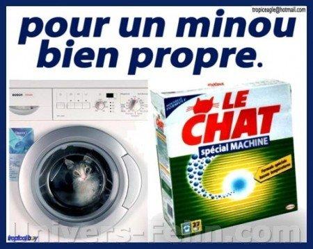 Quimper: Jugé pour avoir tué son chat en le mettant dans la machine à laver Minoupropre